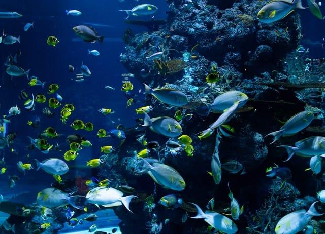 Ecosystem Diversity Image