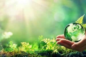 Green World Hypothesis and Sustainability